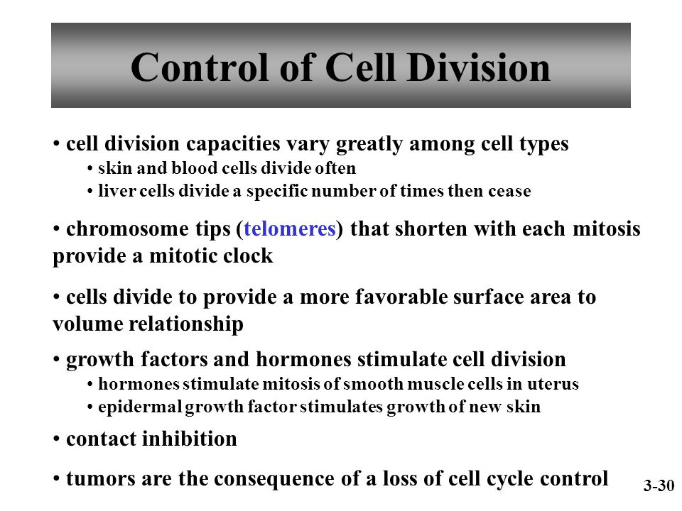 Control of Cell Division cell division capacities vary greatly among cell types skin and blood cells divide often liver cells divide a specific number