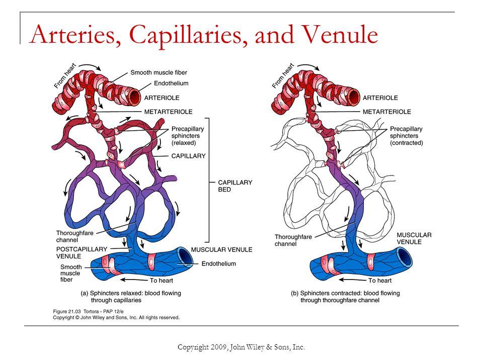 Copyright 2009, John Wiley & Sons, Inc. Arteries, Capillaries, and Venule