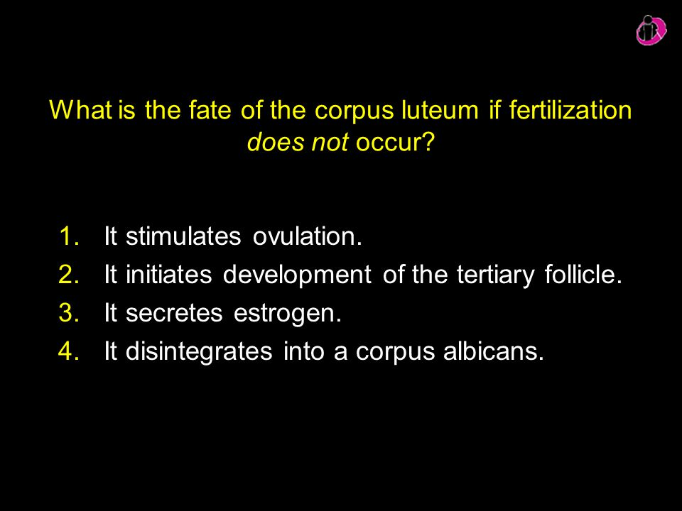 What is the fate of the corpus luteum if fertilization does not occur? 1.It stimulates ovulation. 2.It initiates development of the tertiary follicle.