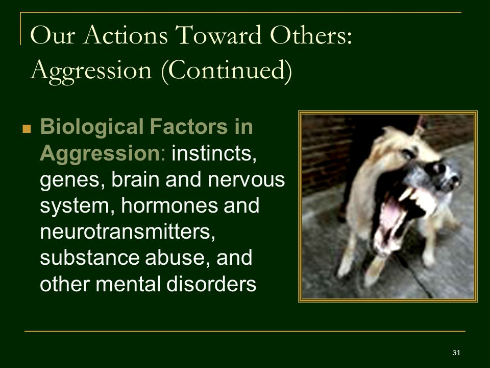 Our Actions Toward Others: Aggression (Continued) Biological Factors in Aggression: instincts, genes, brain and nervous system, hormones and neurotran