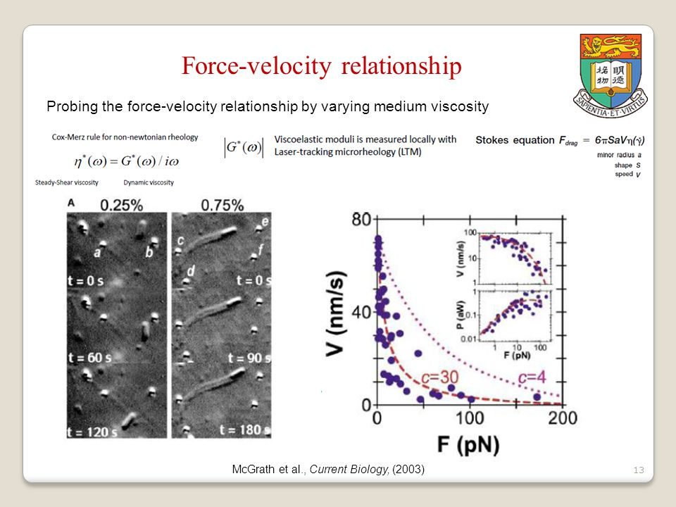 14 Force-velocity relationship Probing the force-velocity relationship by micro-manipulation Marcy et al., PNAS, (2004)