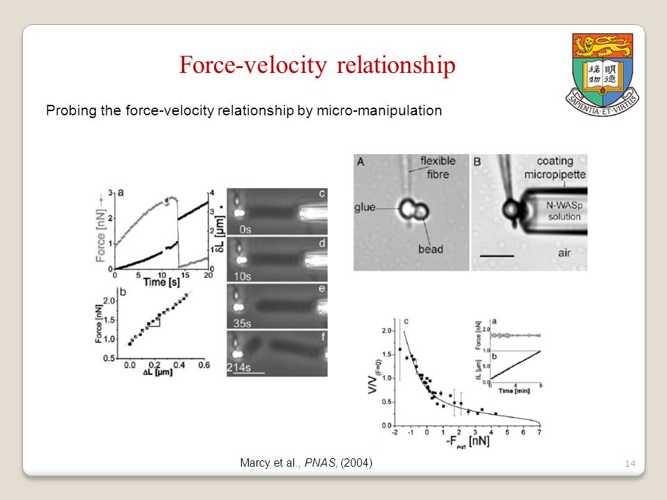 15 Dancing Listeria Shenoy et al., PNAS, (2007) Moving Listeria Hu and Lin, work in progress Moving microsphere