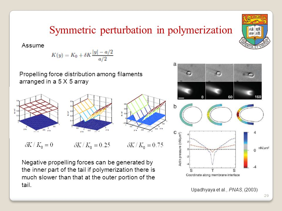 29 Symmetric perturbation in polymerization Assume Propelling force distribution among filaments arranged in a 5 X 5 array Upadhyaya et al., PNAS, (2003) Negative propelling forces can be generated by the inner part of the tail if polymerization there is much slower than that at the outer portion of the tail.