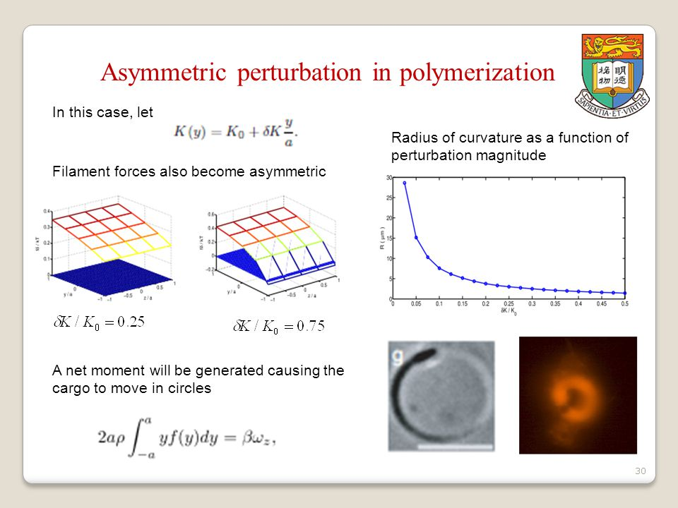 30 Asymmetric perturbation in polymerization In this case, let Filament forces also become asymmetric A net moment will be generated causing the cargo to move in circles Radius of curvature as a function of perturbation magnitude