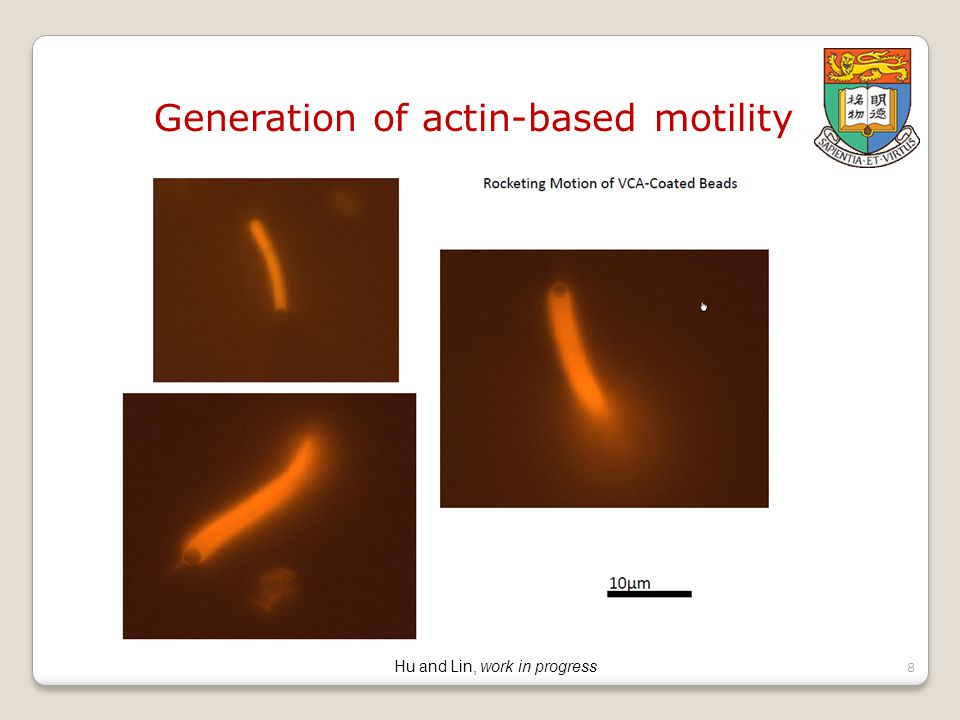 8 Generation of actin-based motility Hu and Lin, work in progress