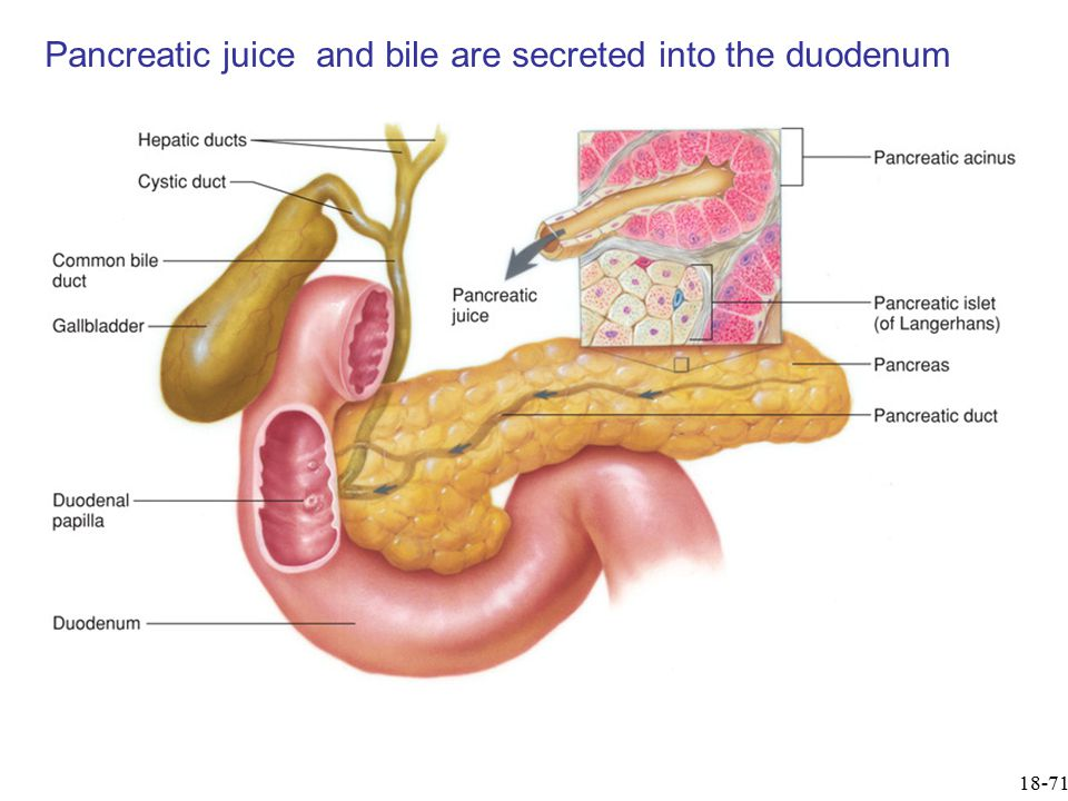 18-71 Pancreatic juice and bile are secreted into the duodenum