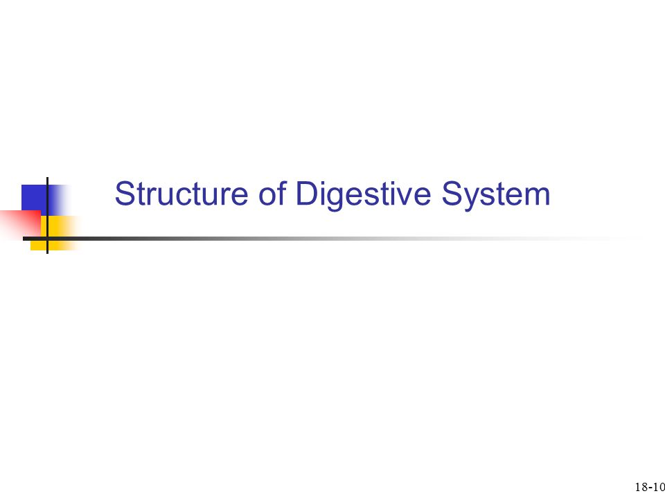 Structure of Digestive System 18-10