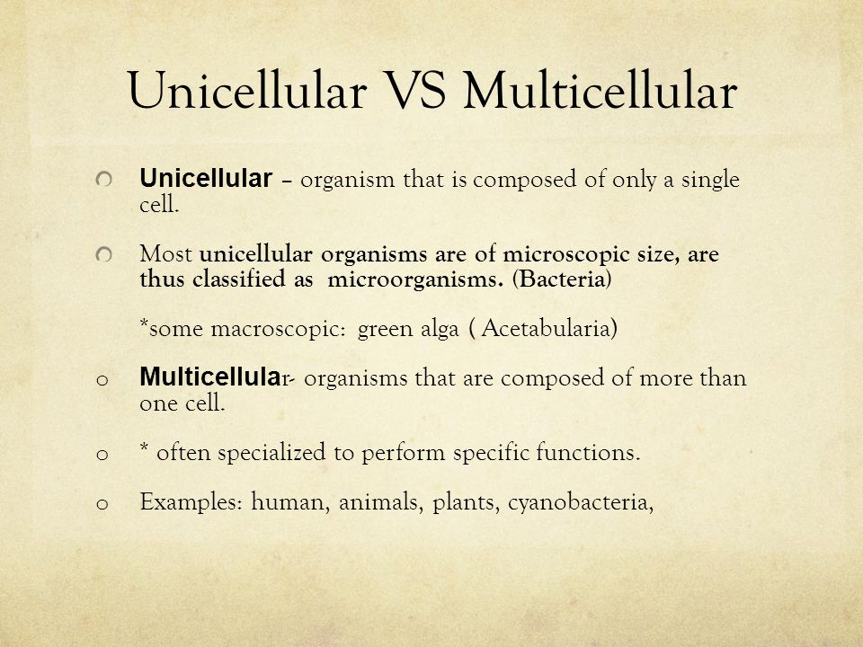 Unicellular VS Multicellular Unicellular – organism that is composed of only a single cell.