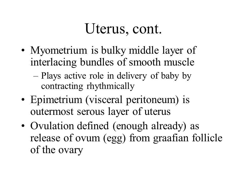 Uterus, cont.