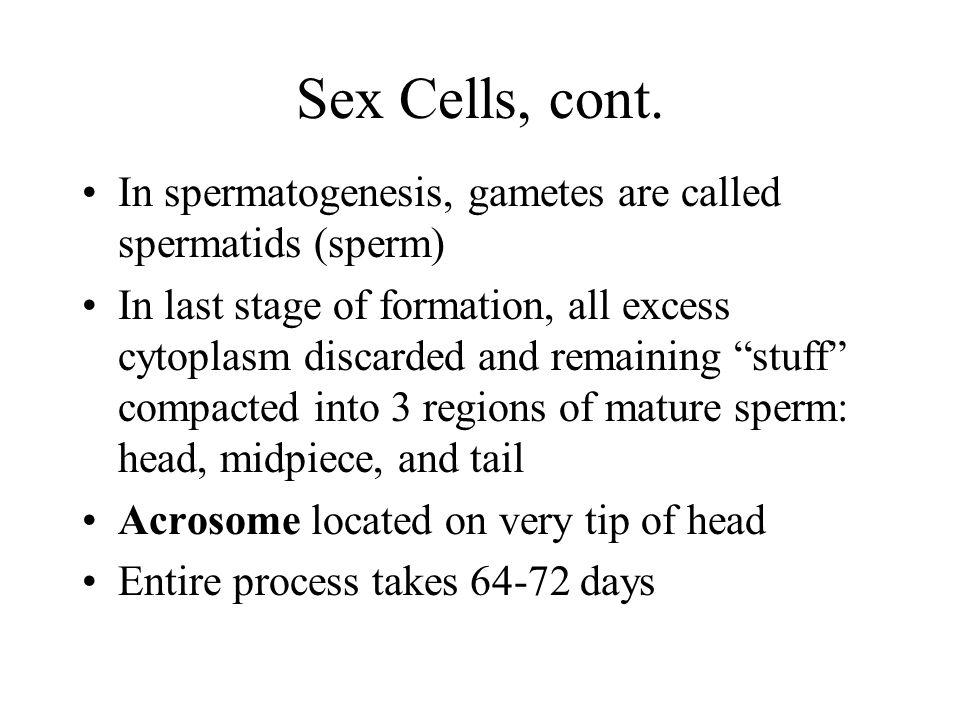 Sex Cells, cont.