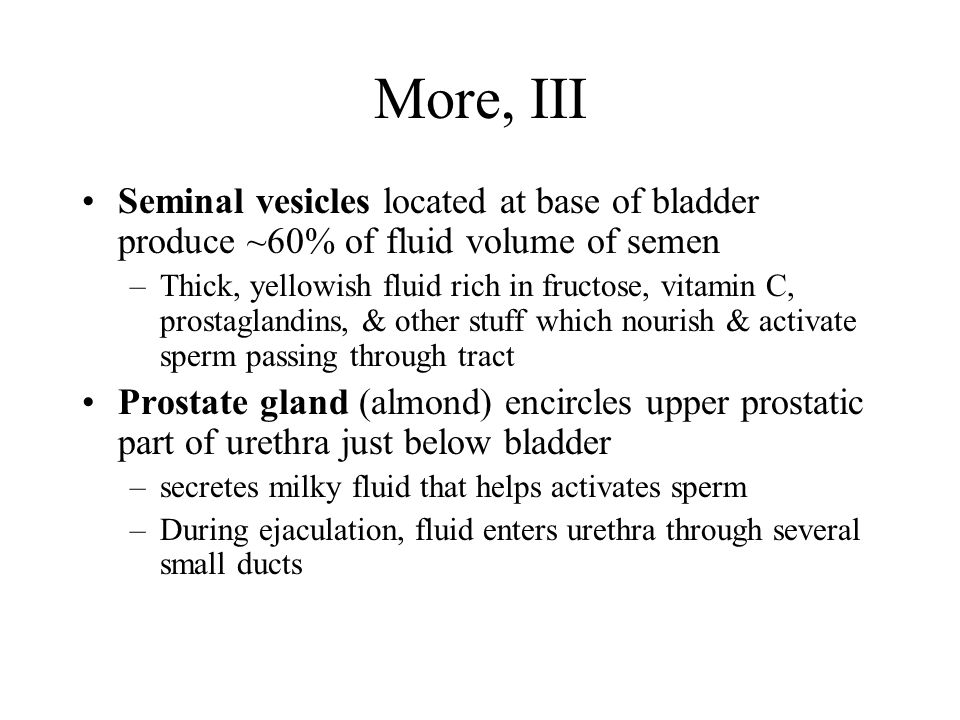 More, III Seminal vesicles located at base of bladder produce ~60% of fluid volume of semen –Thick, yellowish fluid rich in fructose, vitamin C, prostaglandins, & other stuff which nourish & activate sperm passing through tract Prostate gland (almond) encircles upper prostatic part of urethra just below bladder –secretes milky fluid that helps activates sperm –During ejaculation, fluid enters urethra through several small ducts