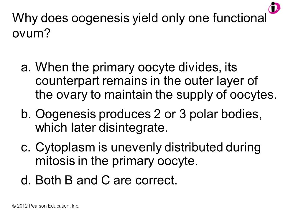 © 2012 Pearson Education, Inc. Why does oogenesis yield only one functional ovum.