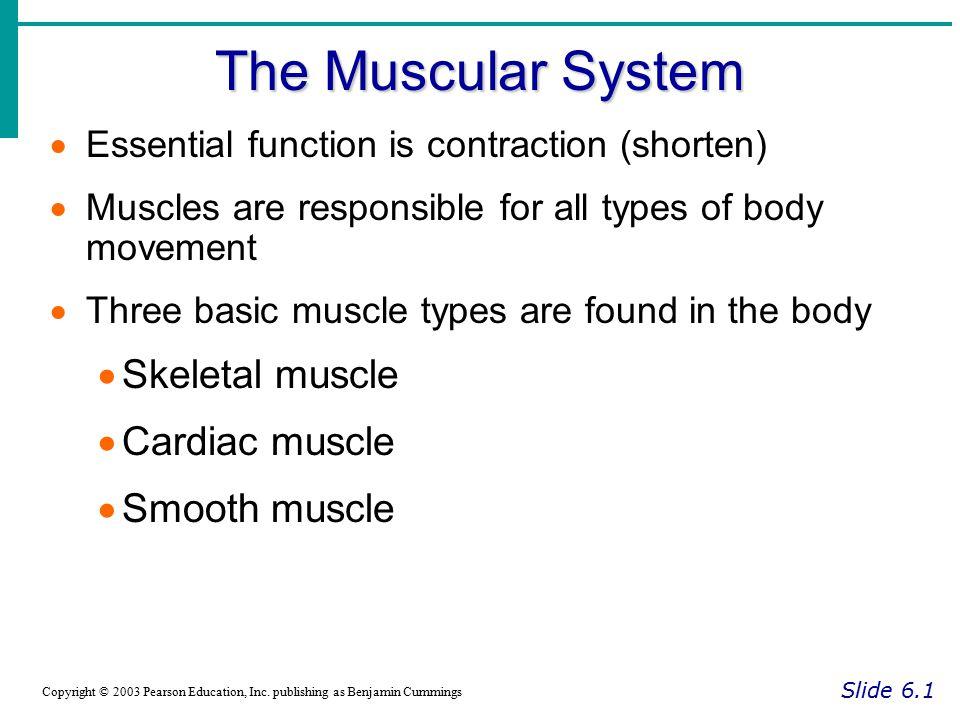 Properties of Skeletal Muscle Fibers Slide 6.13 Copyright © 2003 Pearson Education, Inc.