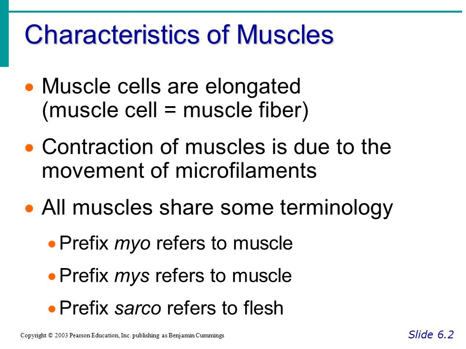 Role of Muscles in the Body Slide 6.8 Copyright © 2003 Pearson Education, Inc.