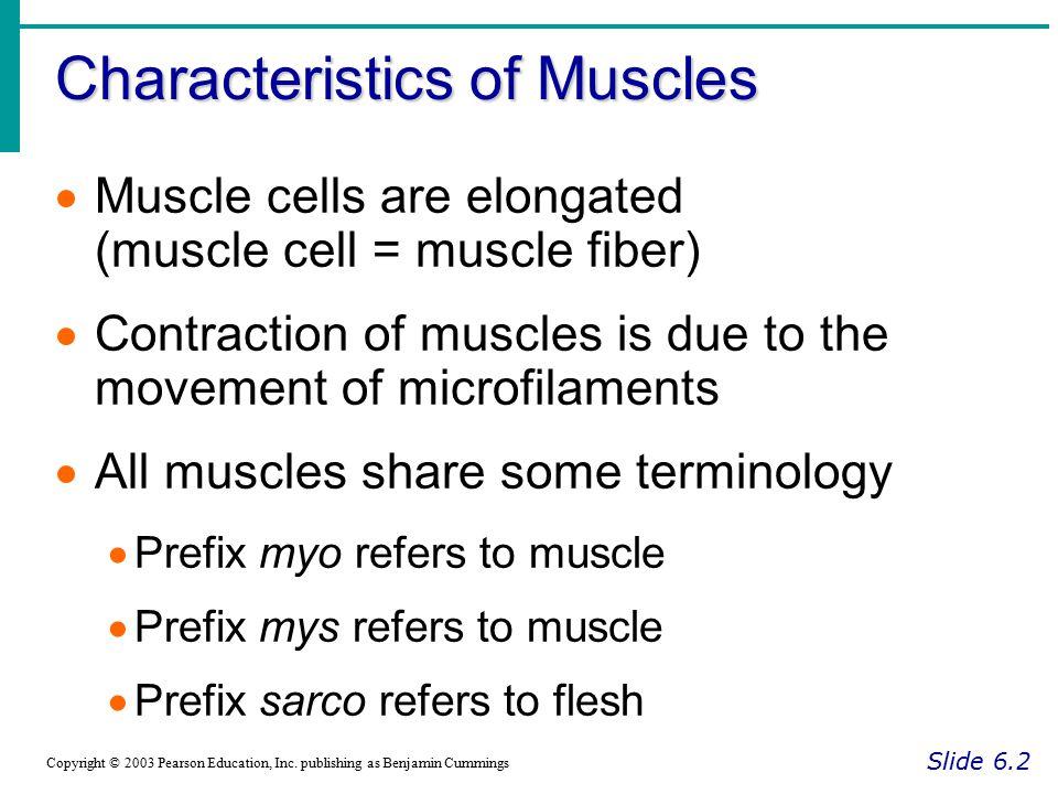 Cardiac Muscle Characteristics Slide 6.7 Copyright © 2003 Pearson Education, Inc.