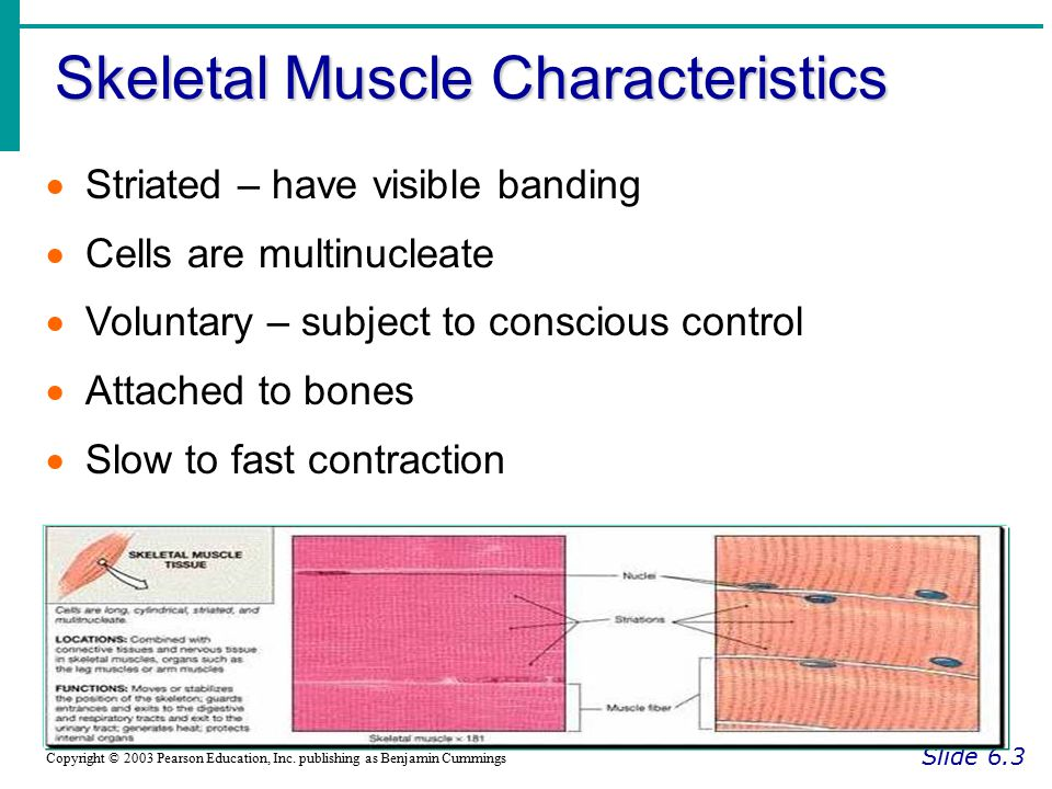 Transmission of Nerve Impulse to Muscle Slide 6.16a Copyright © 2003 Pearson Education, Inc.