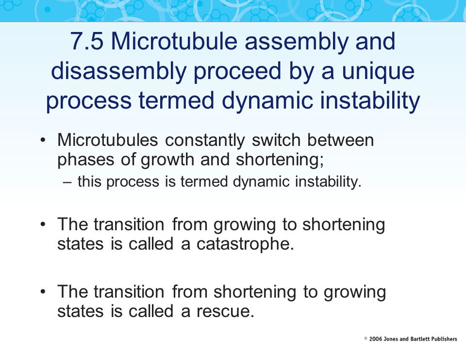 7.5 Microtubule assembly and disassembly proceed by a unique process termed dynamic instability Microtubules constantly switch between phases of growt
