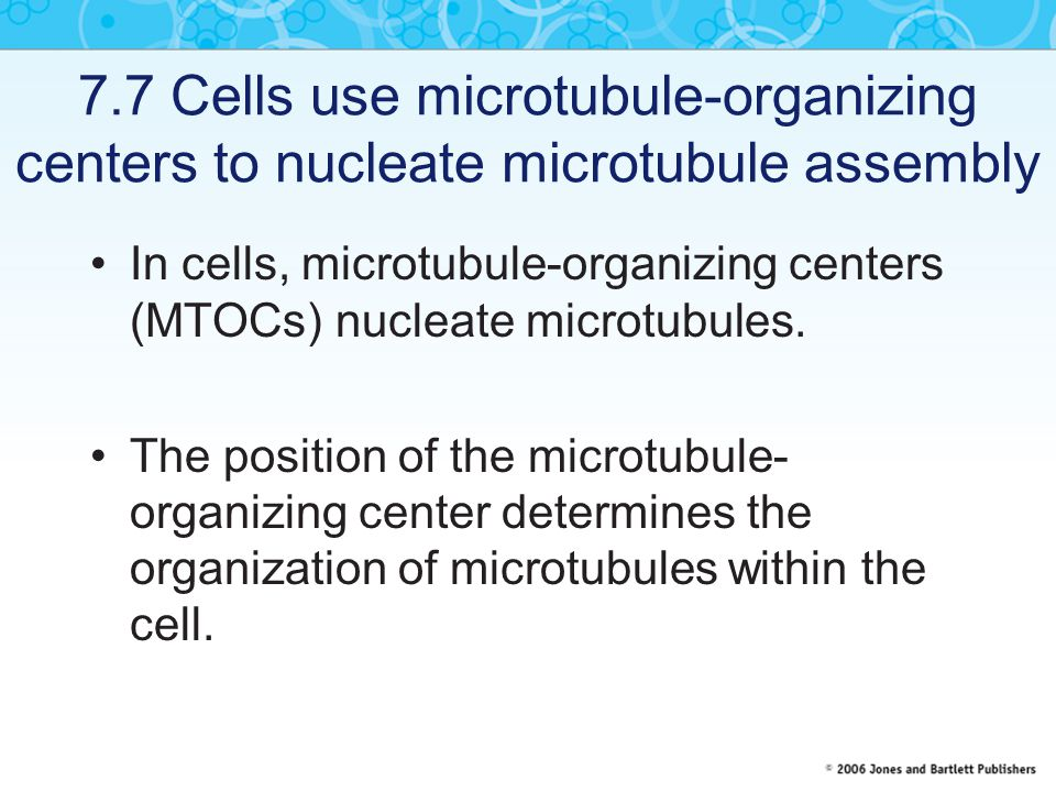 7.7 Cells use microtubule-organizing centers to nucleate microtubule assembly In cells, microtubule-organizing centers (MTOCs) nucleate microtubules.