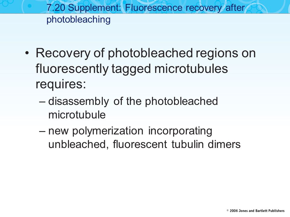 Recovery of photobleached regions on fluorescently tagged microtubules requires: –disassembly of the photobleached microtubule –new polymerization inc