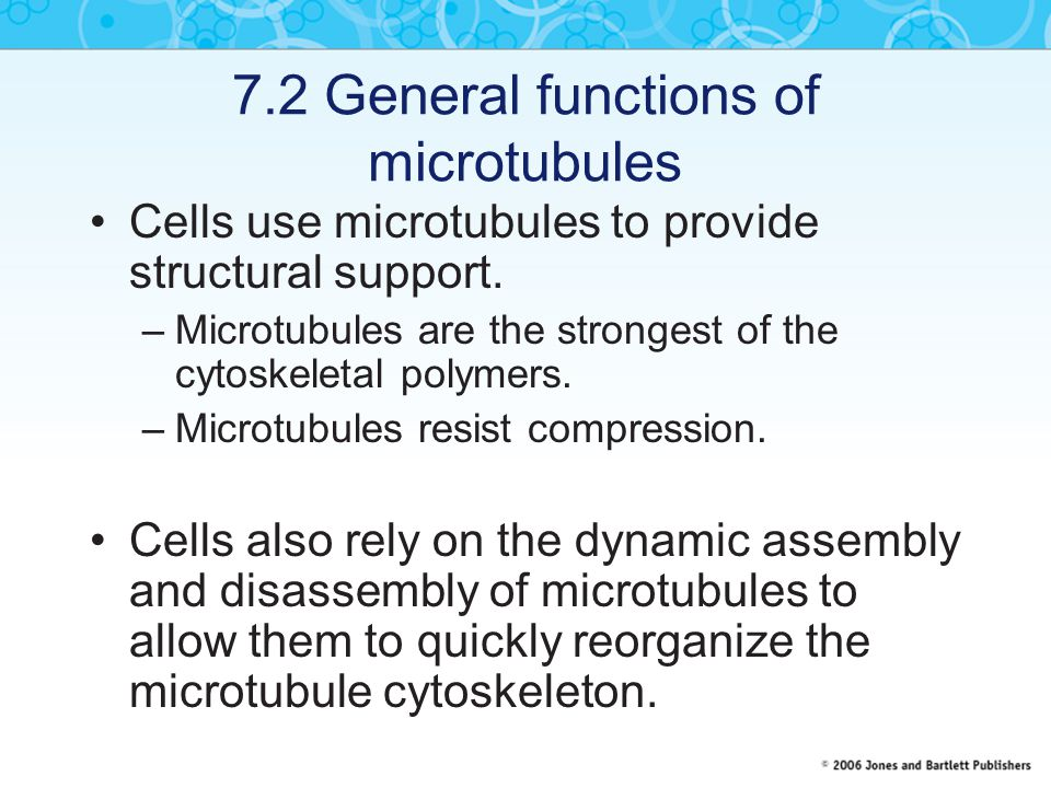 7.2 General functions of microtubules Cells use microtubules to provide structural support. –Microtubules are the strongest of the cytoskeletal polyme