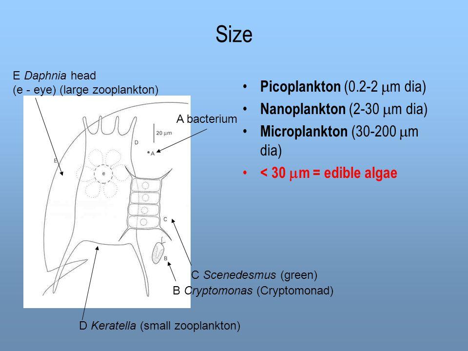 Size Picoplankton (0.2-2  m dia) Nanoplankton (2-30  m dia) Microplankton (30-200  m dia) < 30  m = edible algae A bacterium E Daphnia head (e - e