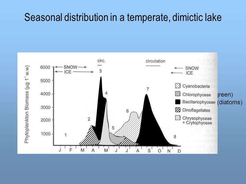 Seasonal distribution in a temperate, dimictic lake (green) (diatoms)
