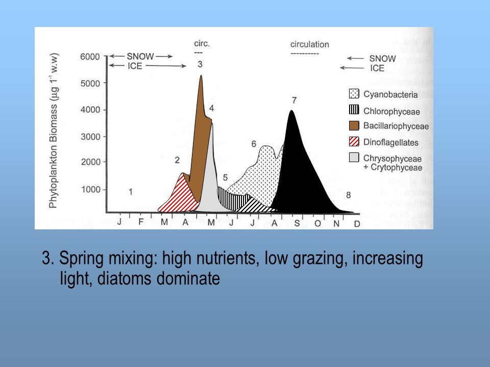 3. Spring mixing: high nutrients, low grazing, increasing light, diatoms dominate