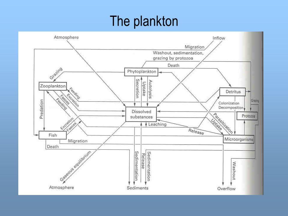 The plankton