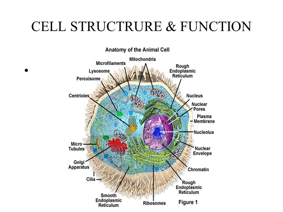CELL STRUCTRURE & FUNCTION