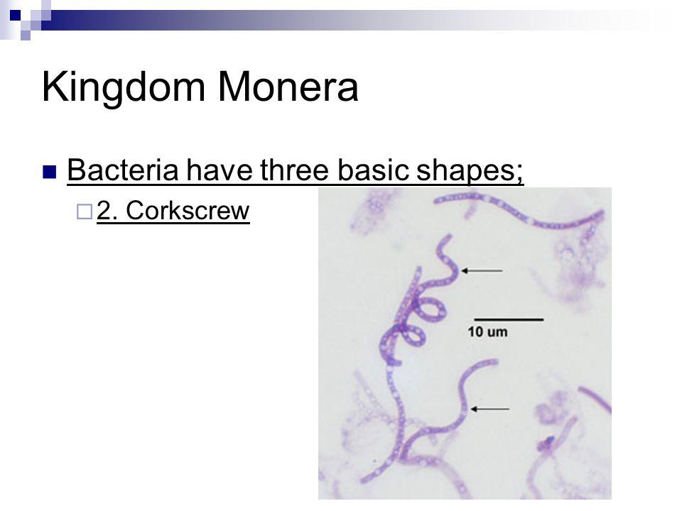 Kingdom Monera Bacteria have three basic shapes;  2. Corkscrew