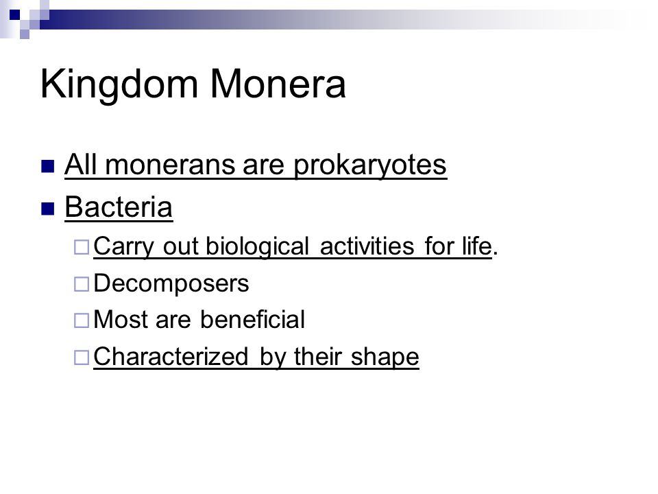 Kingdom Monera All monerans are prokaryotes Bacteria  Carry out biological activities for life.