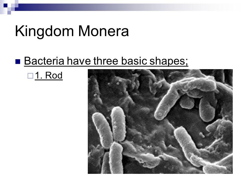 Kingdom Monera Bacteria have three basic shapes;  1. Rod