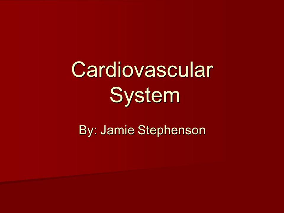 Cardiovascular System By: Jamie Stephenson