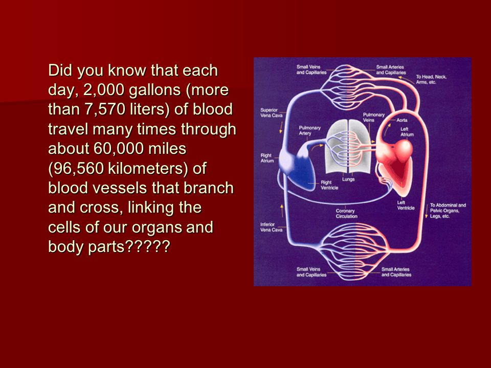 Did you know that each day, 2,000 gallons (more than 7,570 liters) of blood travel many times through about 60,000 miles (96,560 kilometers) of blood