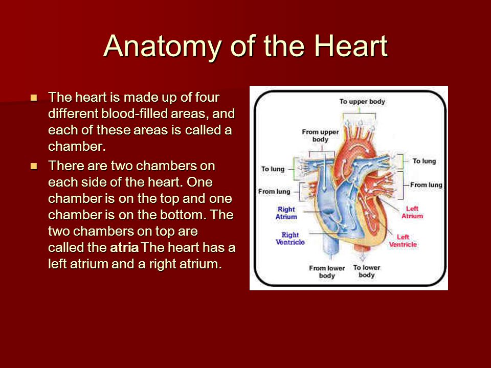 Anatomy of the Heart The heart is made up of four different blood-filled areas, and each of these areas is called a chamber. The heart is made up of f