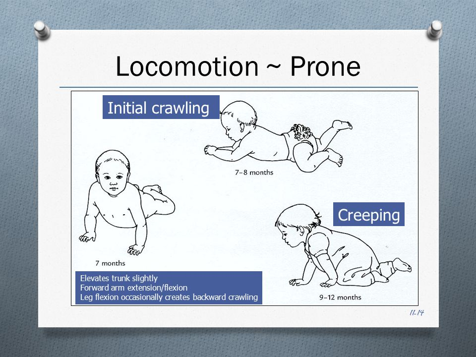 11-14 Locomotion ~ Prone Initial crawling Creeping Elevates trunk slightly Forward arm extension/flexion Leg flexion occasionally creates backward crawling