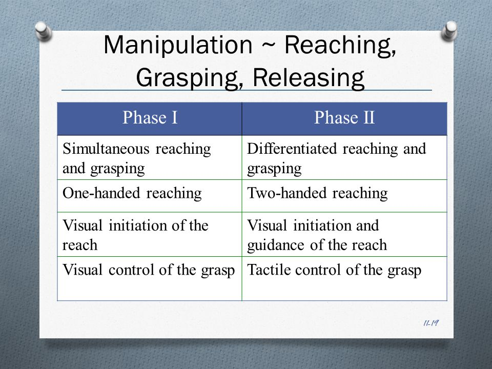 11-19 Manipulation ~ Reaching, Grasping, Releasing Phase IPhase II Simultaneous reaching and grasping Differentiated reaching and grasping One-handed reachingTwo-handed reaching Visual initiation of the reach Visual initiation and guidance of the reach Visual control of the graspTactile control of the grasp