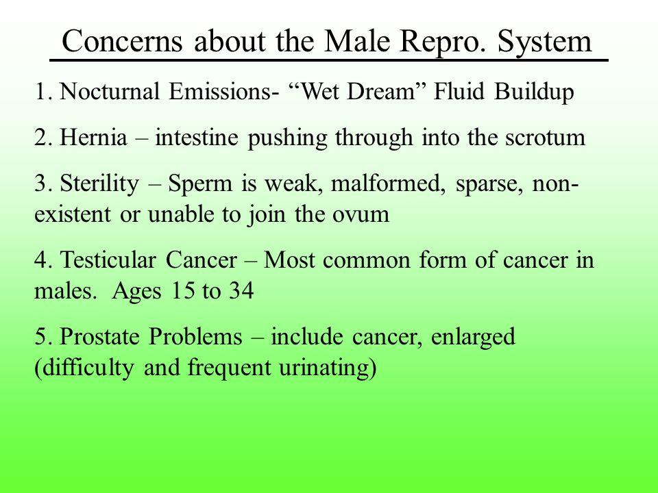 Concerns about the Male Repro.System 1. Nocturnal Emissions- Wet Dream Fluid Buildup 2.