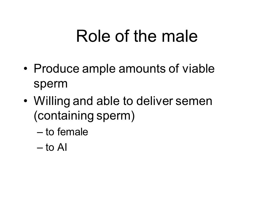 Anatomy of MALE Paired TESTES Epididimyis Vas deferens Penis Scrotum Accessory Sex Glands