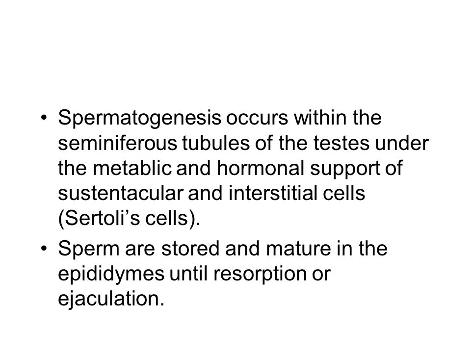 Primary spermatocytes The spermatogenic cells--spermatogonia, primary spermatocytes, secondary spermatocytes, spermatids and spermatozoa--represent different cell stages in spermatogenesis.