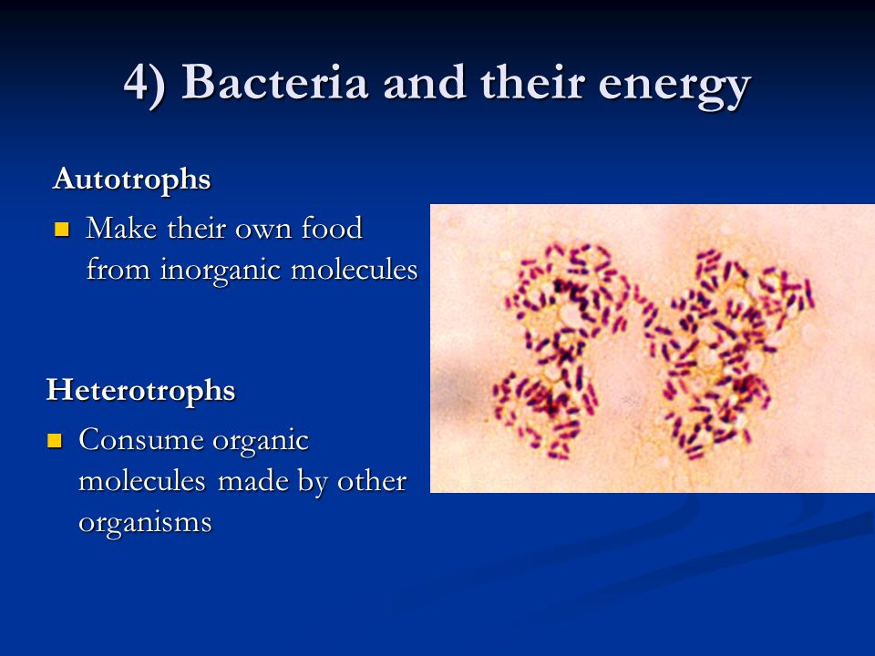 4) Bacteria and their energy Autotrophs Make their own food from inorganic molecules Make their own food from inorganic molecules Heterotrophs Consume