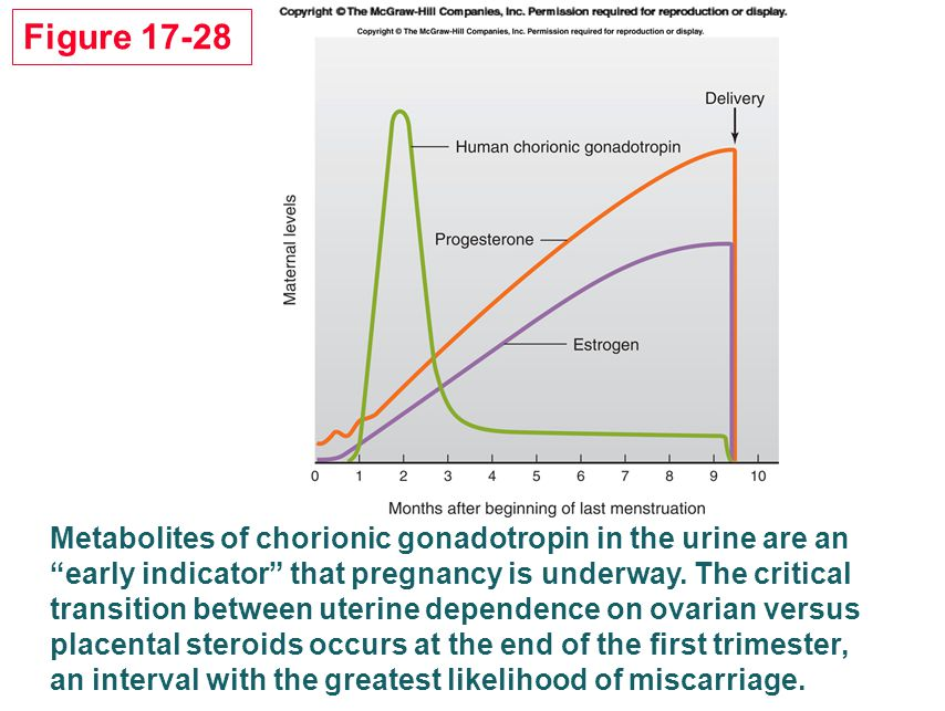 "Metabolites of chorionic gonadotropin in the urine are an ""early indicator"" that pregnancy is underway. The critical transition between uterine depend"
