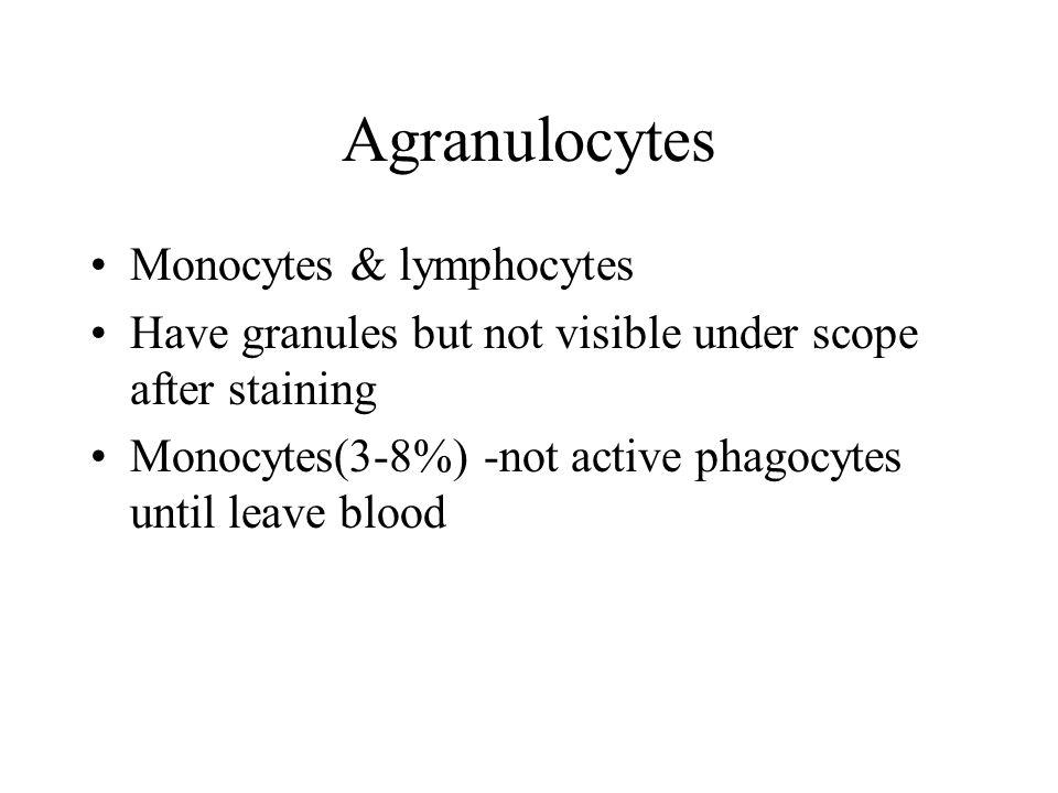 Agranulocytes Monocytes & lymphocytes Have granules but not visible under scope after staining Monocytes(3-8%) -not active phagocytes until leave blood