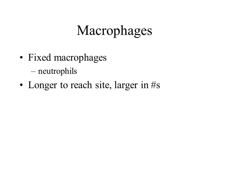Macrophages Fixed macrophages –neutrophils Longer to reach site, larger in #s