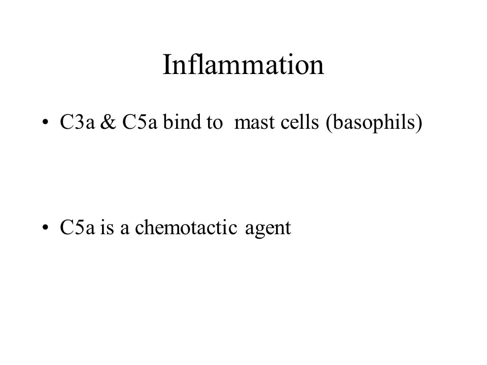 Inflammation C3a & C5a bind to mast cells (basophils) C5a is a chemotactic agent