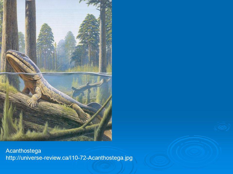 Acanthostega http://universe-review.ca/I10-72-Acanthostega.jpg
