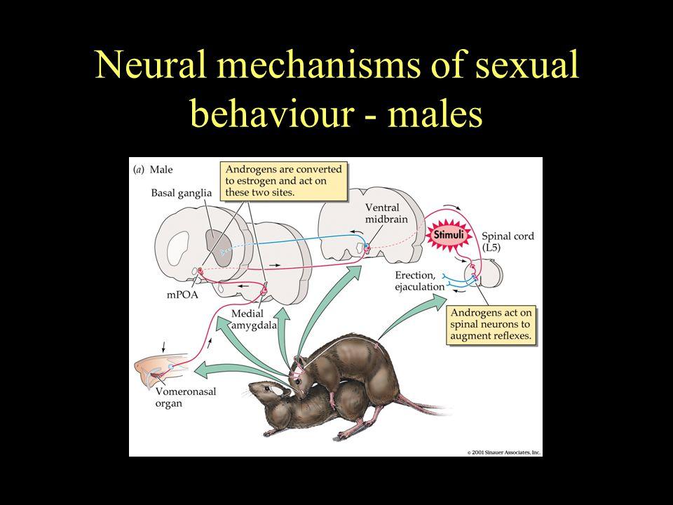 Neural mechanisms of sexual behaviour - females