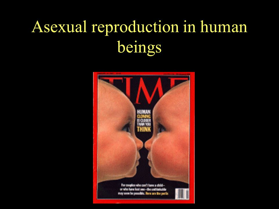 The Argument Against Sex 1.Biologically, the purpose of an individual is to propel a copy of its genes into the next generation 2.With asexual reproduction, 100% of one's genes are propagated.