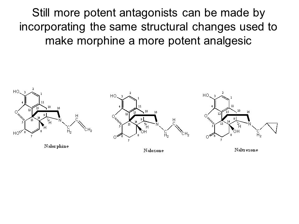 Still more potent antagonists can be made by incorporating the same structural changes used to make morphine a more potent analgesic