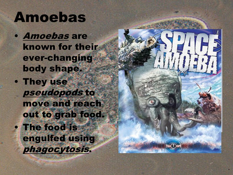 Amoebas Amoebas are known for their ever-changing body shape.